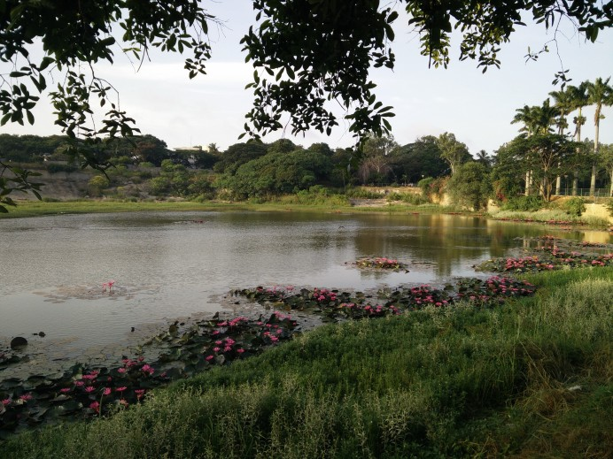 The lake in Lal Bagh